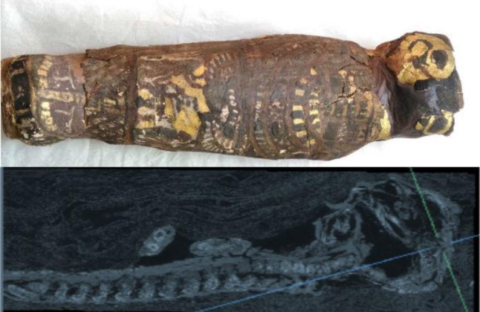 Imaxe exterior da momia e análise do TAC. Fonte: Western University.