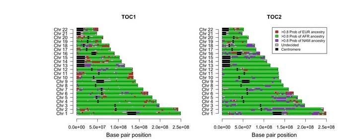 Herdanza xenómica dos individuos afrobolivianos estudados polos científicos galegos. En verde, herdanza africana, en vermello, herdanza europea, e en violeta, herdanza americana. Fonte: BMC Genomics.