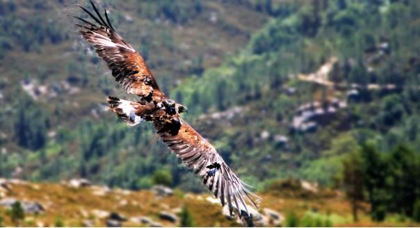 En el Xurés pueden verse el 76% de las especies de aves que hay en Galicia. Fonte: parquesnaturais.xunta. gal.