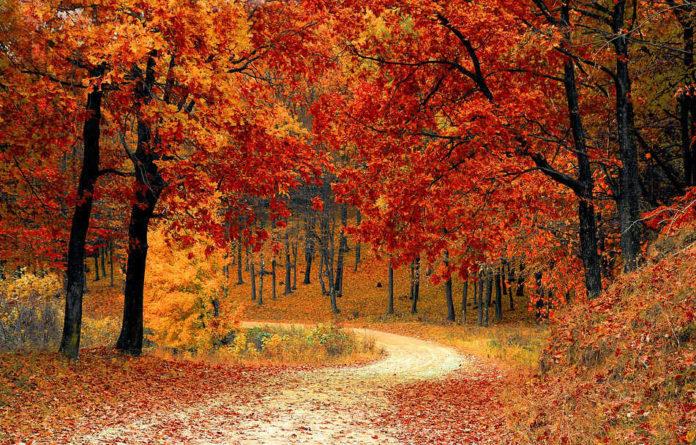 A caída das follas e unha reacción das árbores para pasar mellor o outono e o inverno.