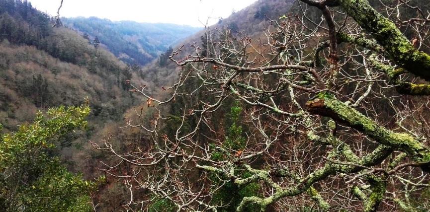 El color de las Fragas do Eume varía a lo largo del año, al ritmo que marcan los líquenes, las hojas caducas y las perennes. Fuente: turismo.gal.