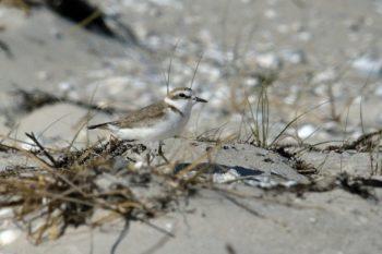 Las aves, como la píllara, son otro de los grandes atractivos del parque.