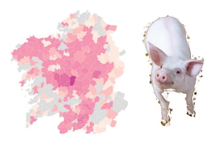 Cinco concellos galegos teñen máis de 50.000 porcos rexistrados.
