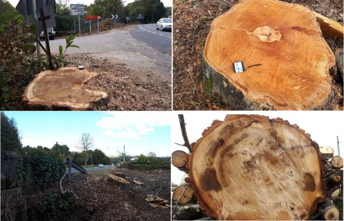 Varias imaxes da corta de árbores realizadas en Esgos e Pereiro de Aguiar. Fotos cedidas por Xosé Santos.