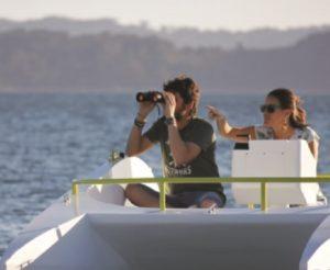 O barco Xouva pretende fomentar tamén o turismo de observación ornitolóxica e mariña. Foto: xouvaboats.com.