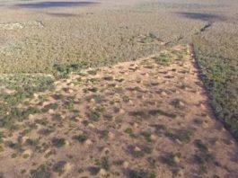 Vista aérea da enorme estrutura creada polas termitas no nordeste de Brasil. Fonte: Current Biology.