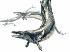 """A """"Basilosaurus isis"""", hoxe extinta, podía acadar os 15 metros e tiña un longo fuciño e dentes afiados. Fonte: PlosONE."""