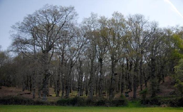 Vista xeral de Catasós. Fonte: Concello de Lalín.