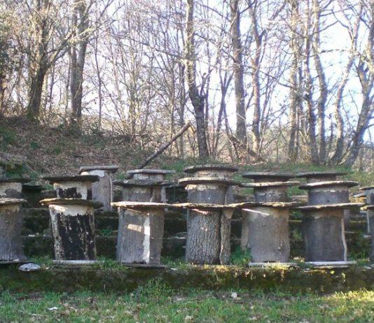 Os principais focos da actividade cereira situáronse nos concellos da zona de Terra de Montes, con Forcarei como centro de referencia, e o de Covelo. Fonte: Duvi.