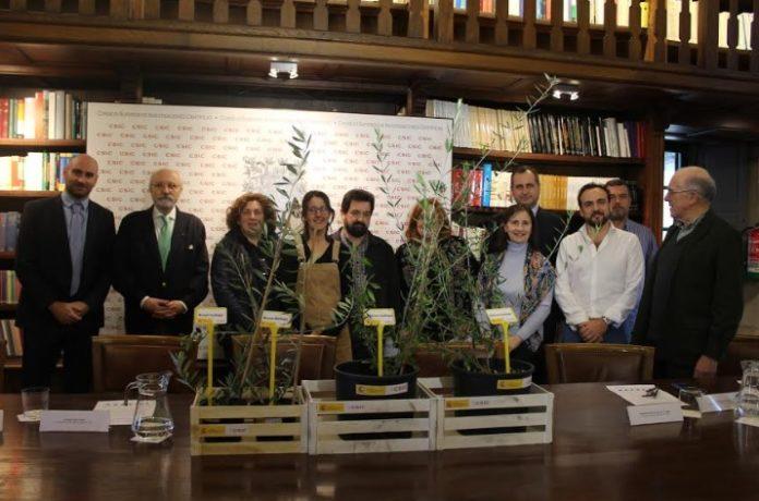 Acto simbólico de entrega das oliveiras celebrado este mércores en Santiago. Foto: CSIC Galicia.