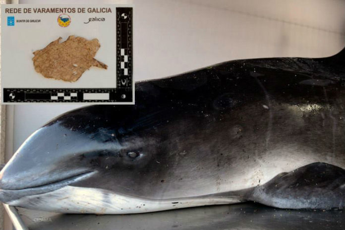 A toniña tiña no estómago un anaco de plástico de 10x6 centímetros. Fonte: Cemma.