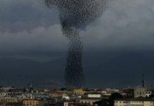 Bandada de estorniños sobre Roma.