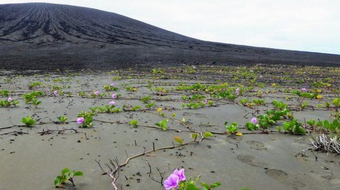 Na illa Hunga Tonga apareceron xa algúns vexetais e niños de paxaros. Fonte: Dan Slayback/NASA.
