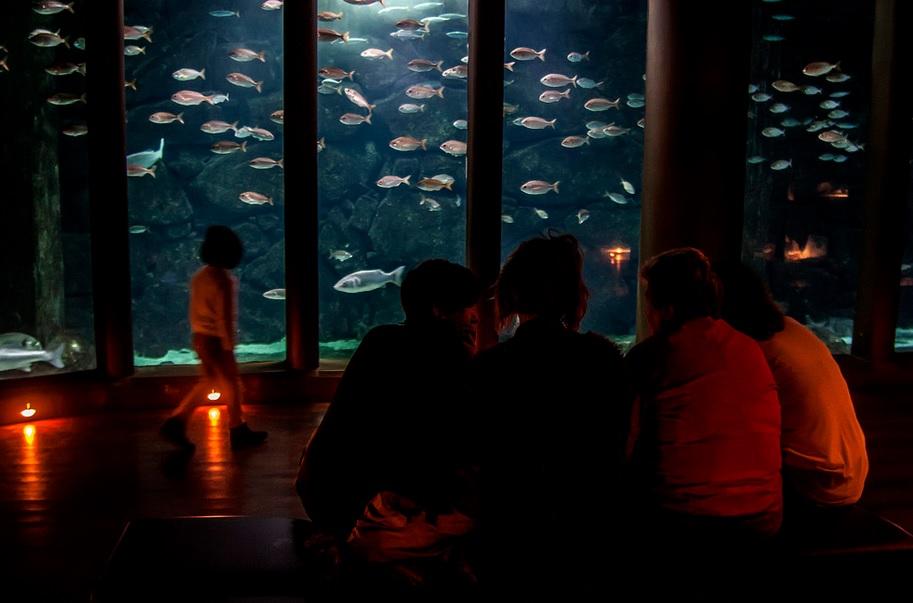 Sala Nautilus do Aquarium Finisterrae. Foto: MC2.