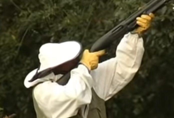É habitual que algúns afectados pola vespa recorran a escopetas para destruír os niños. Fonte: ETB.
