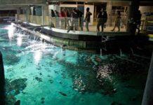 O Aquarium abre as portas da súa zona técnica á cidadanía con esta actividade. Fonte: MC2.