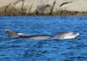 Imaxes de arroaces tomadas durante as saídas do proxecto Turgasur. Fonte: Cemma.