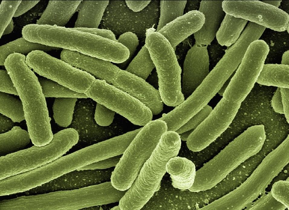 As autoridades de saúde pública advirten do crecente problema da resistencia de bacterias a antibióticos.