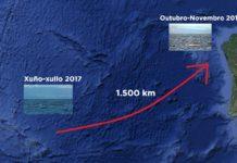 """Os exemplares de """"Balaenoptera musculus"""" e """"Balaenoptera physalus"""" viaxaron dos Azores a Galicia en poucos meses de 2017. Fonte: BDRI / Elaboración propia."""