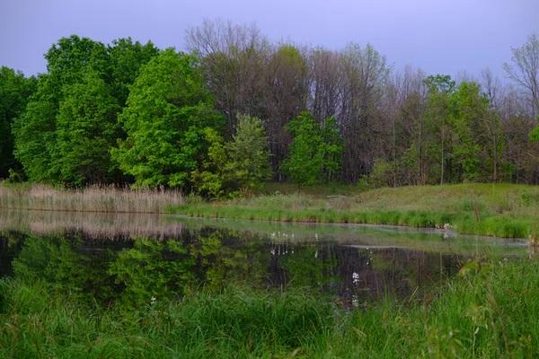 Campía e bosque de ribeira na zona de chernóbil. foto: germán orizaola.