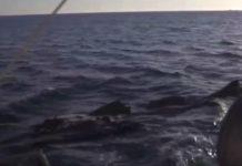 Captura do vídeo gravado en Louro na que aparece o suposto peixe. Fonte: Modesto Segade/Facebook.