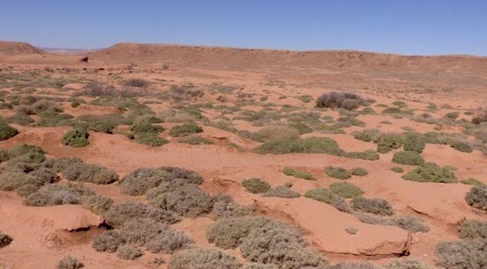 As plantas teñen que adaptarse con diversas estratexias para subsistir ao ambiente do deserto. Fonte: Divulgare.