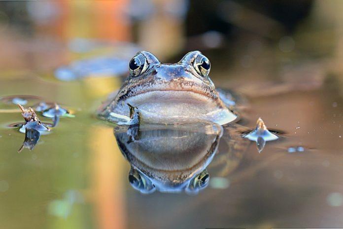 Os anfibios son unha das clases de animais máis afectados polo impacto antrópico no planeta.