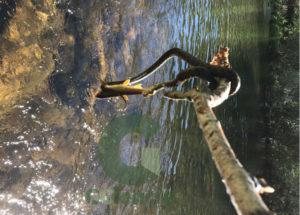 Outra das imaxes da cobra e o peixe. Foto cedida por Pablo García.