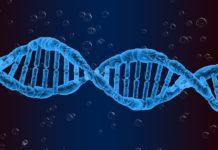 O vínculo entre o lupus e as mutacións xenéticas podería axudar no tratamento da doenza.