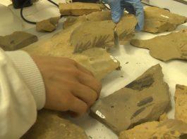 A análise dos fósiles da flora achega importantes datos sobre a época dos dinosauros. Fonte: Enrique Domínguez.