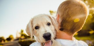 O estudio expón que os cans que melloraron a súa expresividade tiñan unha vantaxe competitiva na evolución fronte ao resto.