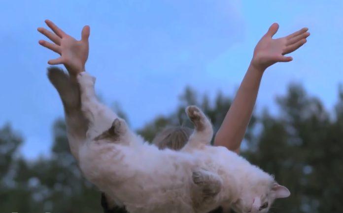 Por que os gatos caen sempre de pé e outras curiosidades. Fonte: Smarter every day.