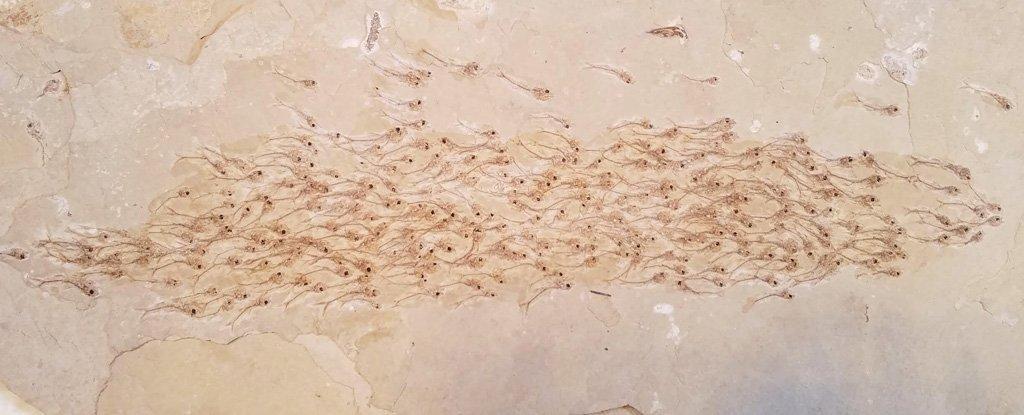 O banco de peixes fósiles atopado nos Estados Unidos.