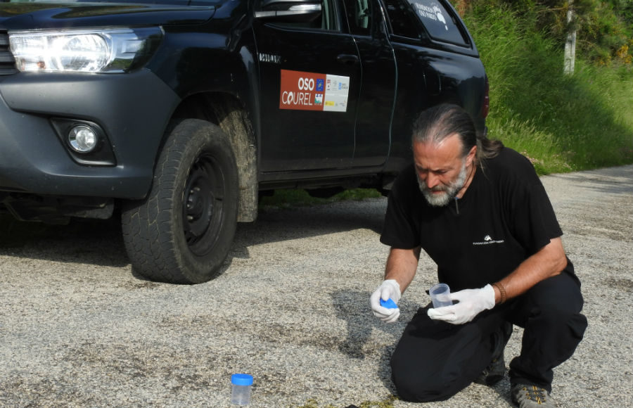 Luis Fernández recolle unha mostra de excrementos. Foto cedida por Fundación Oso Pardo.