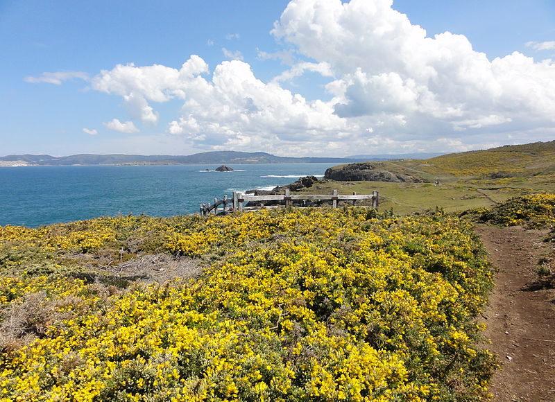 Toxos en flor no litoral de Dexo. Fonte: Tanja Freibott.