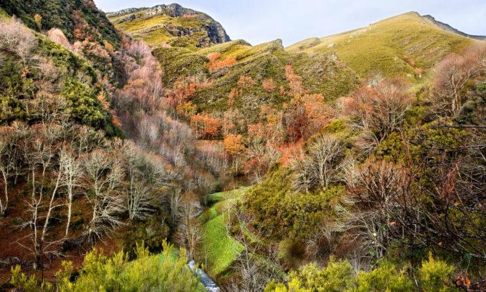 Devesa da Rogueira, ao pé dalgún dos cumes máis altos da serra, que inclúen elementos característicos do xeoparque mundial da UNESCO. Foto: xunta.gal.