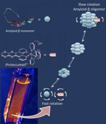 O sensor a aproveita a anisotropía de fluorescencia para medir a rotación do amiloide beta, conforme estas proteínas van crecendo en disolución.. Como os agregados do amiloide rotan máis amodo, o novo sensor é quen de detectar estes cambios.. Imaxe cortesía do grupo de Ángel Martí (Universidade de Rice).