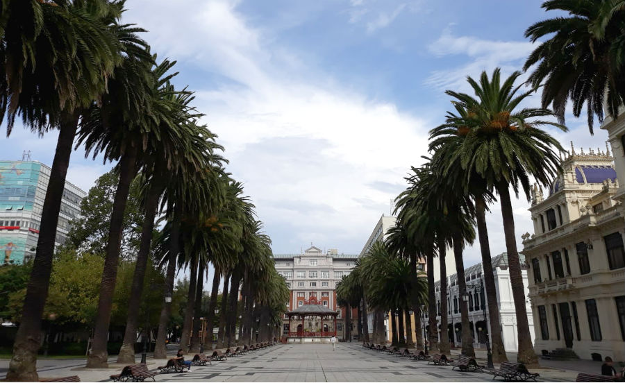 O Concello da Coruña xa tomou medidas no palmeiral de Méndez Núñez, unha das formacións do Catálogo de Árbores Senlleiras de Galicia. Foto: R. Pan.
