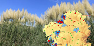 O estudo analiza a situación da herba da Pampa nos polígonos industriais. Fonte: Fagúndez et. al (2019)/Elaboración propia.