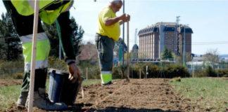 Plantación de cultivos enerzéticos no proxecto Life Lugo + Biodinámico. Foto:UPM.