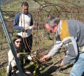 Traballos de campo no proxecto On-Farm. Foto: CSIC.