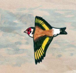 Ilustración dun xílgaro, que se incluirá na guía das aves que publican Nacho Munilla e Pancho Lapeña.