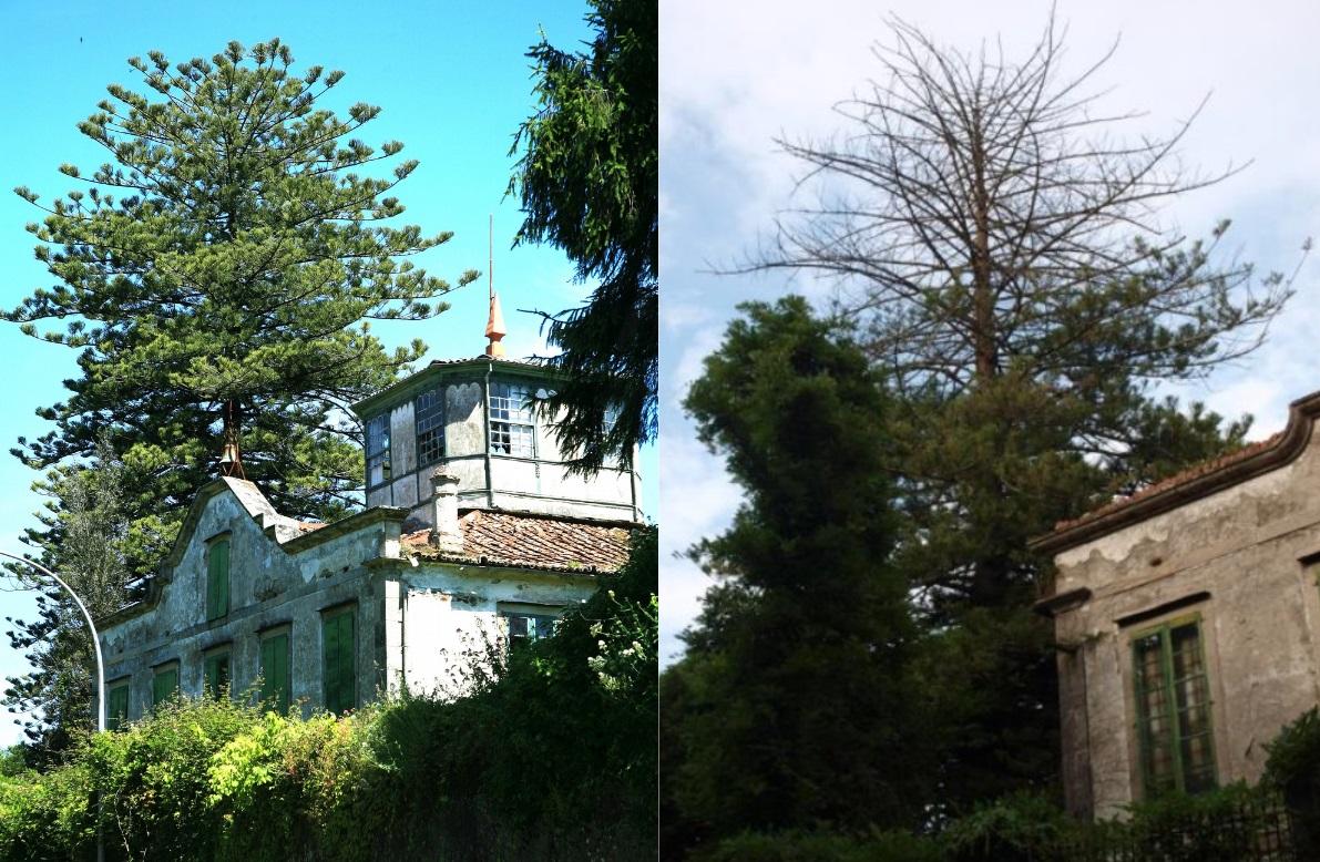 Fotos de 2009 (esquerda) e 2018. Imaxes de Miguel Ángel Montero Vaz e Gaspar Bernárdez Villegas.