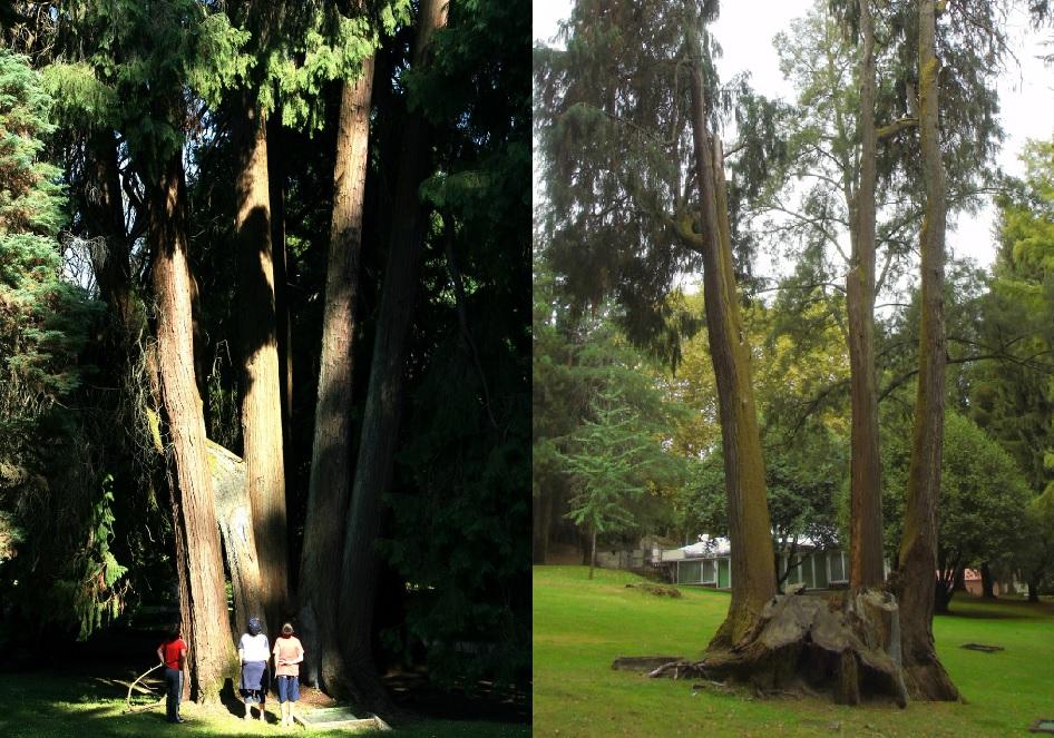Fotos de 2009 (esquerda) e 2018. Imaxes de Miguel Ángel Montero Vaz e Deputación de