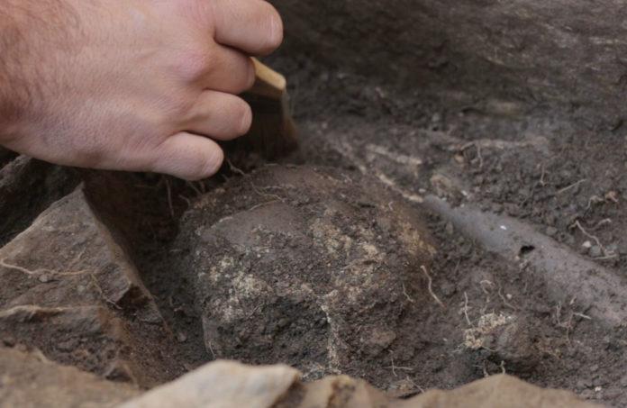 Caveira atopada nos Conventos. Foto: Adegas da Memoria.