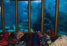 """Imaxe dunha das actividades de """"Durmindo con tiburóns"""". Fonte: MC2."""