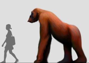 """Recreación artística do tamaño dun """"Gigantopithecus"""" fronte a un H. sapiens."""