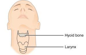 Situación do hioide sobre a larinxe.