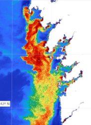 Mapa de clorofila nas Rías Baixas derivado de imaxes Sentinel. Fonte: Duvi.