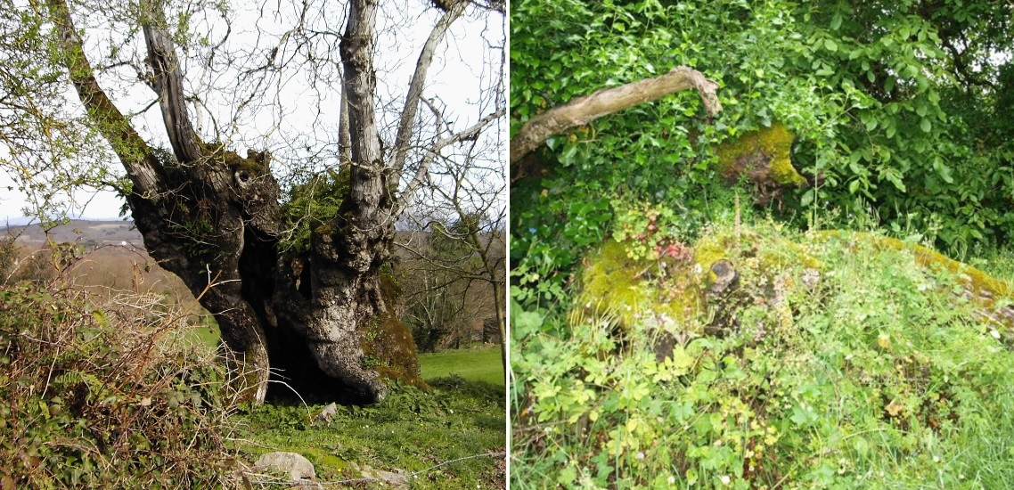 Fotos de 2011 (esquerda) e 2018. Imaxes de Gaspar Bernárdez Villegas.